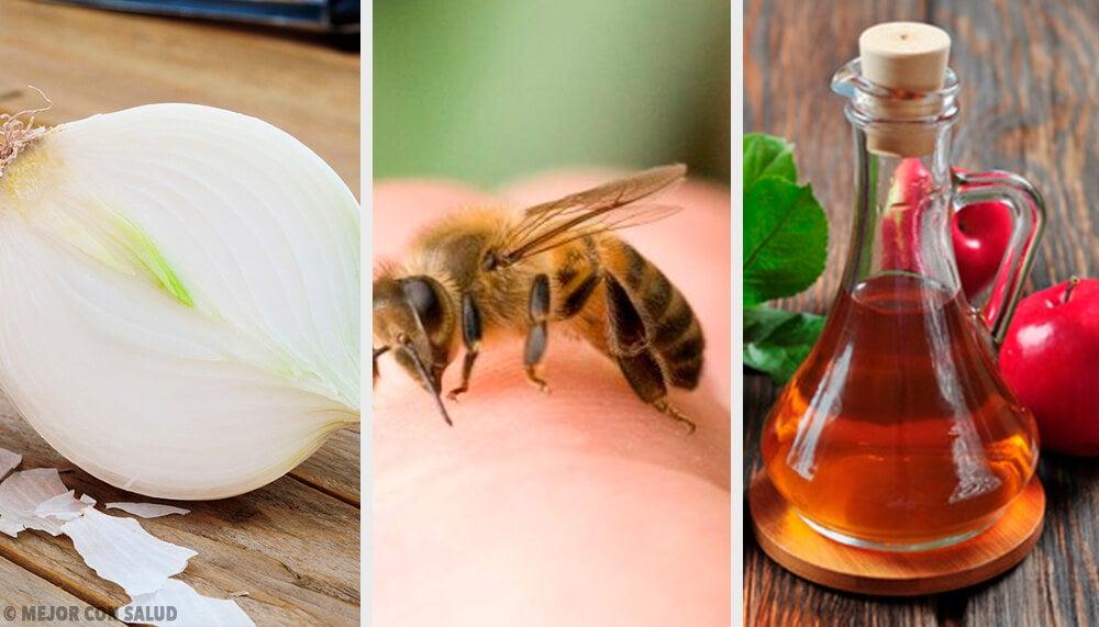 8 Remedios Caseros Para Curar Las Picaduras De Abeja Mejor Con Salud