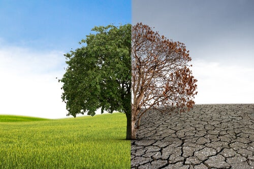 Árbol en crecimiento