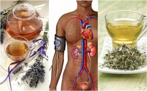 Reduce la presión arterial alta con estos 5 remedios herbales