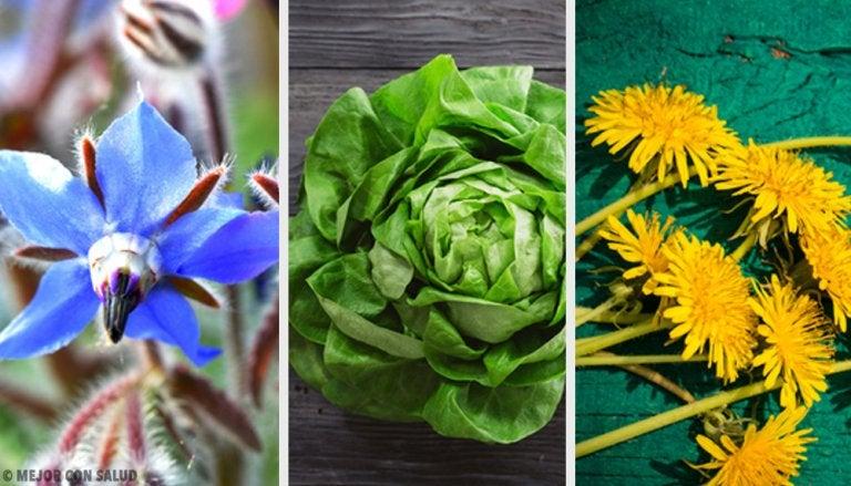 ¿Sabías que estas plantas silvestres son totalmente comestibles?