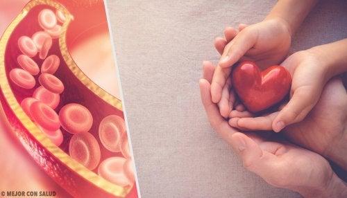 Todo lo que deberías saber sobre el colesterol