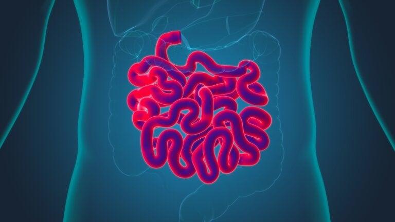 Fisiología del intestino delgado