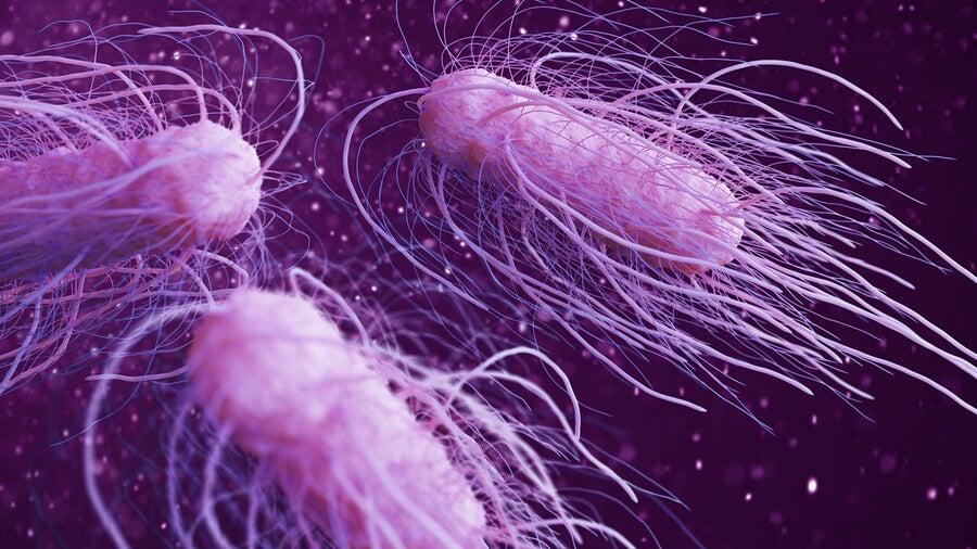 Las 9 bacterias peligrosas más dañinas para el ser humano
