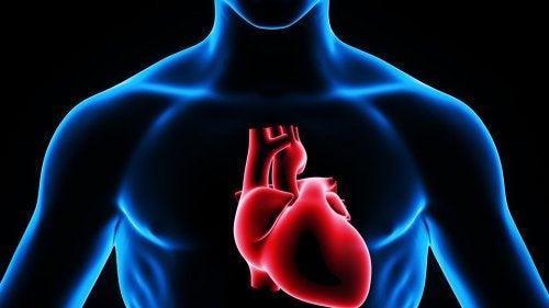 Representación del corazón