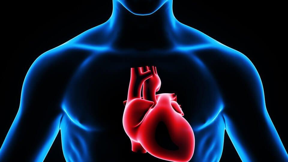 El ritmo del corazón puede verse alterado por un exceso de trabajo