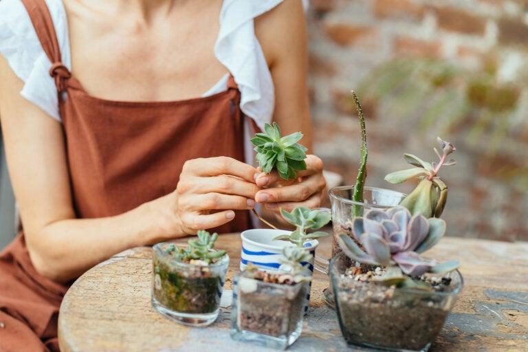 Consejos para crear un minijardín