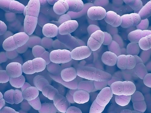 Virus-y-bacterias-agentes-causales-de-la-neumonía