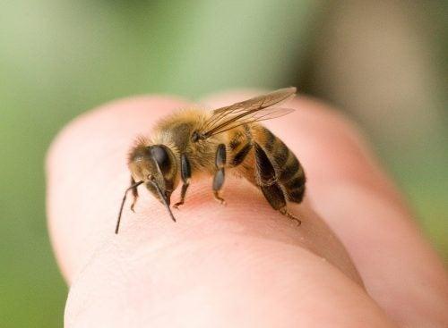 Picadura producida por abeja
