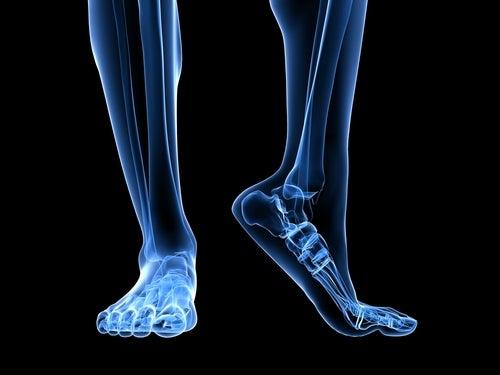 Anatomía del pie en 3D
