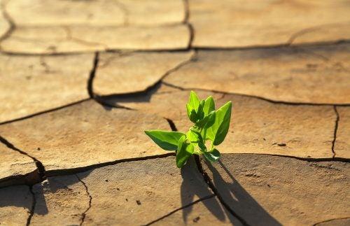 planta-en-terreno-desértico