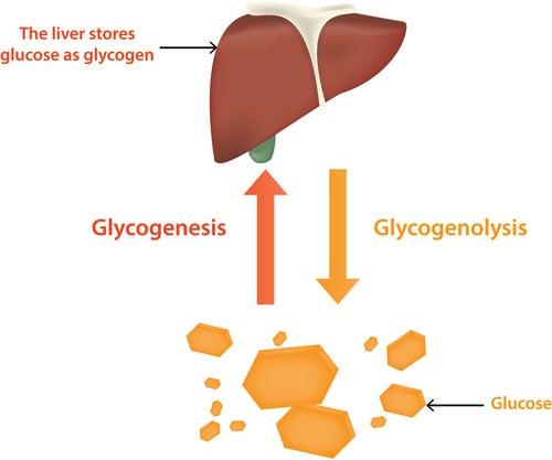 Regulación del metabolismo de la glucosa por parte del hígado