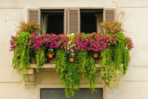 Enredadera en balcón