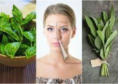 5 hierbas que te ayudarán a combatir el acné de forma natural