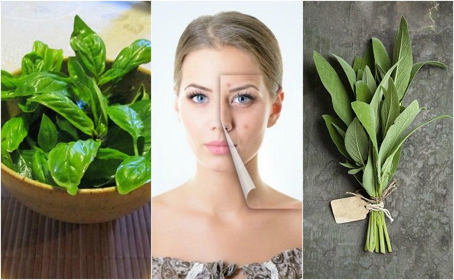 5 hierbas para combatir el acné