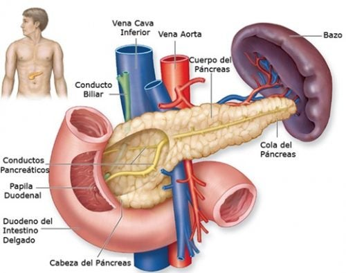 Las venas del páncreas