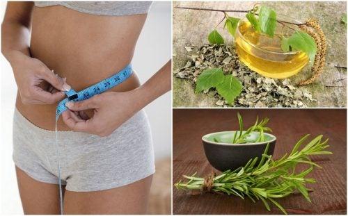 8 hierbas complemento de dieta para bajar de peso