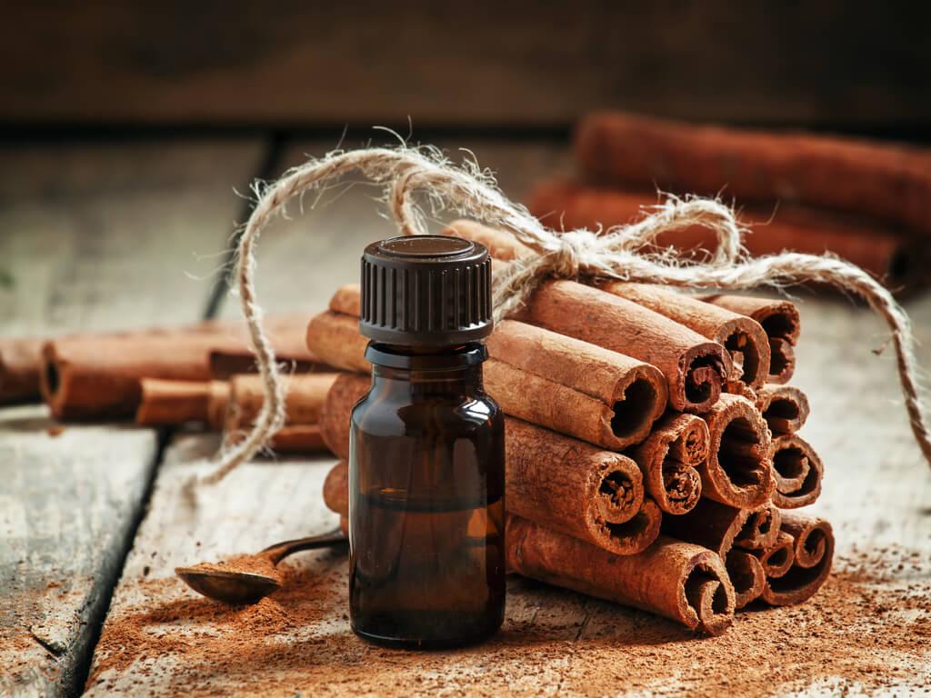Aceite esencial de canela para preparar aceite de ratero.
