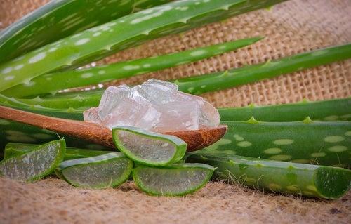 Aloe vera para tratar la sarna