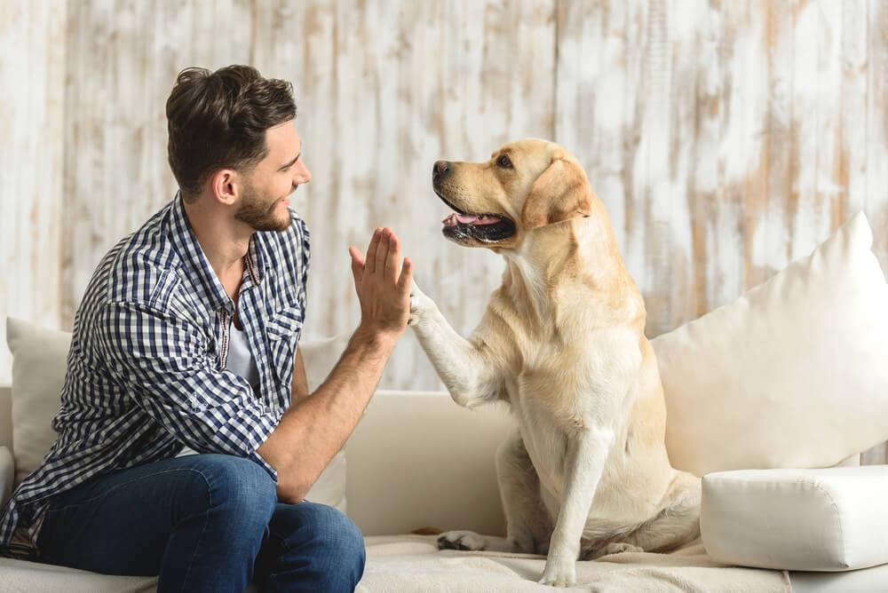 Beneficios para la salud de tener un perro en casa