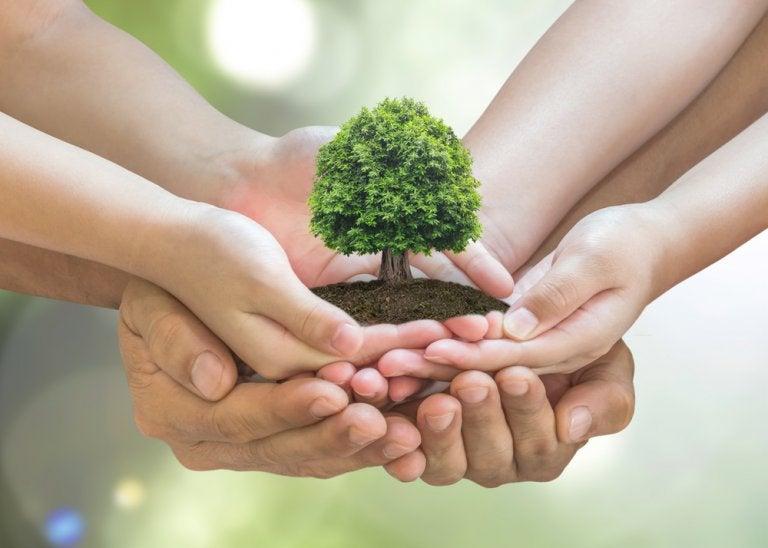 10 tips para cuidar el medio ambiente en tu hogar