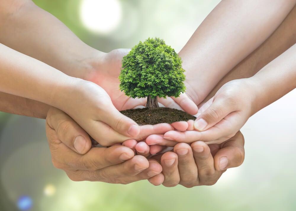 Cómo proteger al medio ambiente