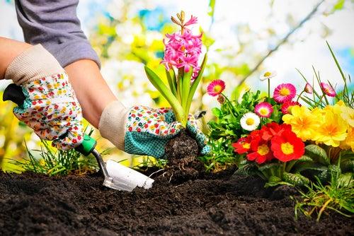 Como fertilizante