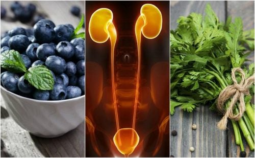 Alimentos beneficiosos para la infeccion de orina
