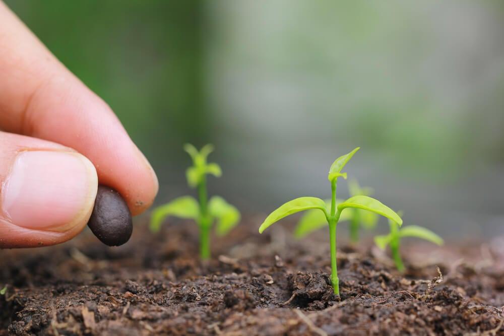 Semillas germinadas en la dieta vegana