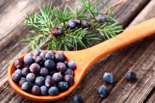 Enebro: una de las hierbas complemento de dieta