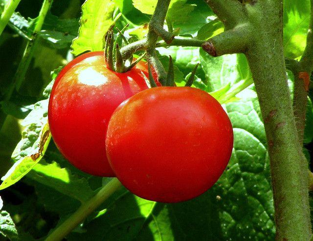 estreñimiento tomate