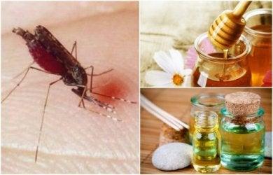 Los 6 mejores remedios naturales para curar las picaduras de mosquito