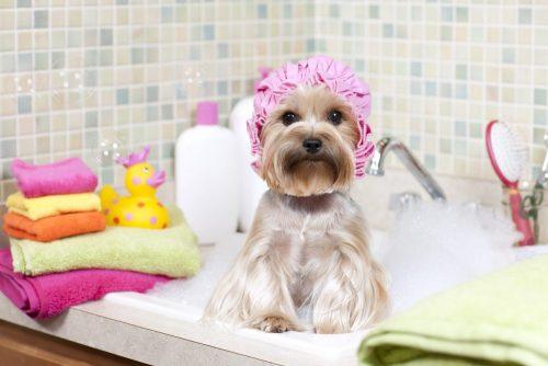 Bañar a tu mascota.