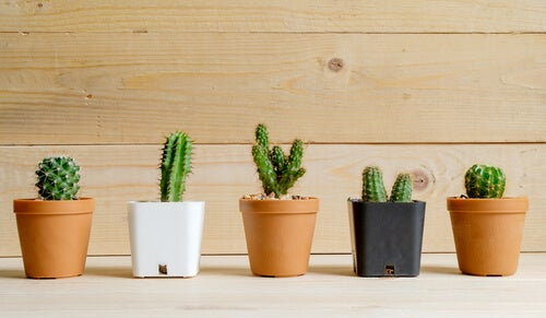 Plantas de deserto