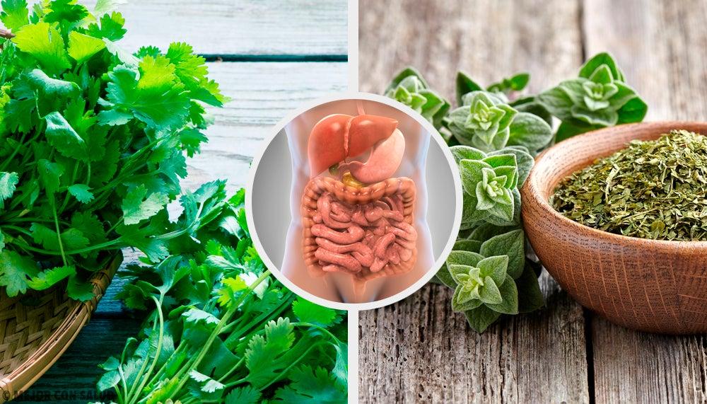 5 infusiones de hierbas para desintoxicar el sistema digestivo