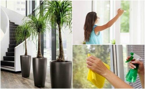 6 cosas que puedes hacer para mejorar la calidad del aire de tu hogar