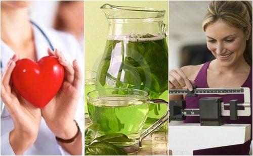 6 importantes beneficios que obtienes por consumir té verde