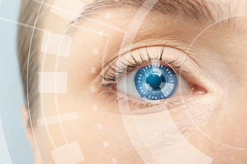 El Sentido De La Vista Y Las Partes Del Ojo Mejor Con Salud