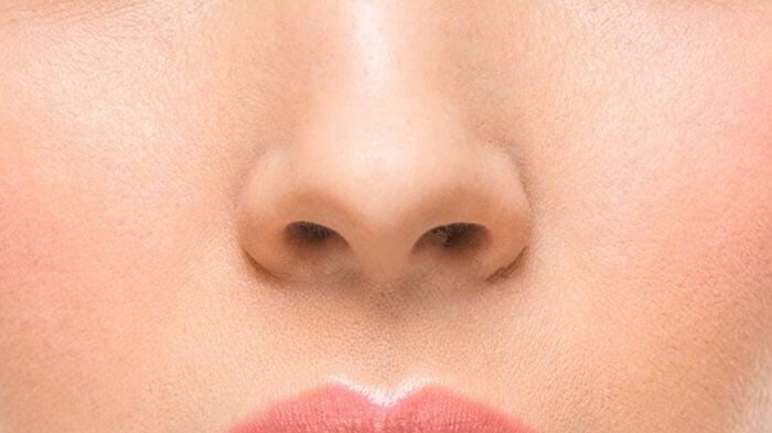 Anatomía externa de la nariz