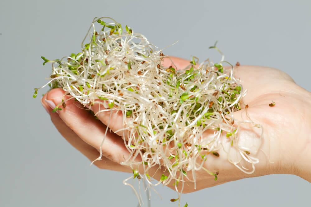 Brotes crudos y otras raíces