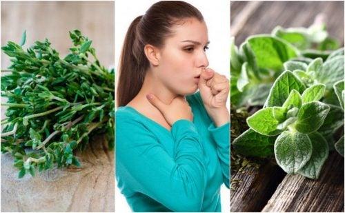 Cómo aliviar la tos con flemas usando 5 plantas medicinales