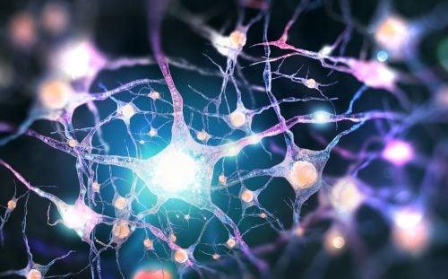 actividad neuronal en el cuerpo durante el sueño