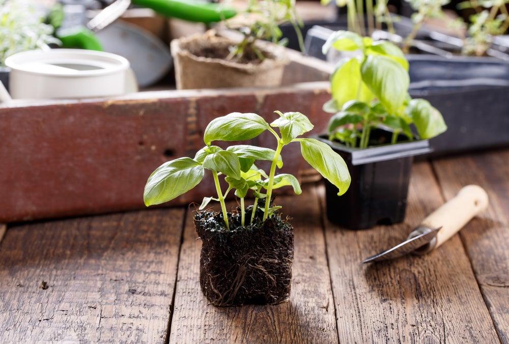 Tener plantas en casa
