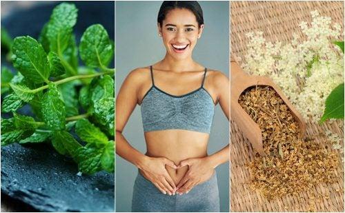 Cuida tu digestión con estas 6 plantas curativas