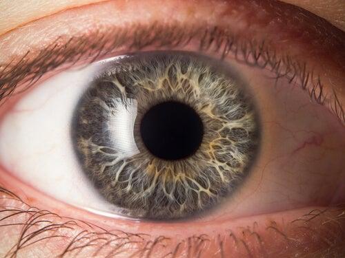 El interior del globo ocular