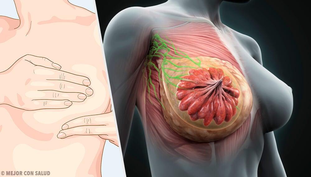 La anatomía de la mama