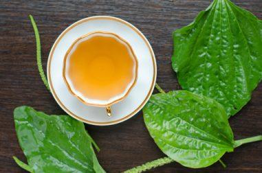 Que es el llanten planta medicinal