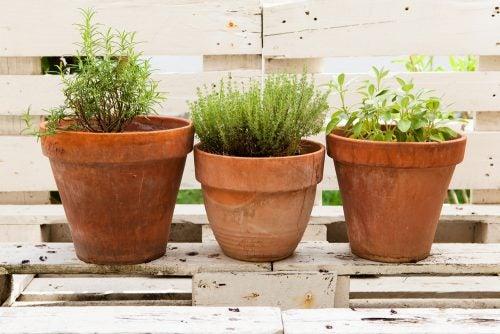 Rincon-en-la-casa-para-las-plantas