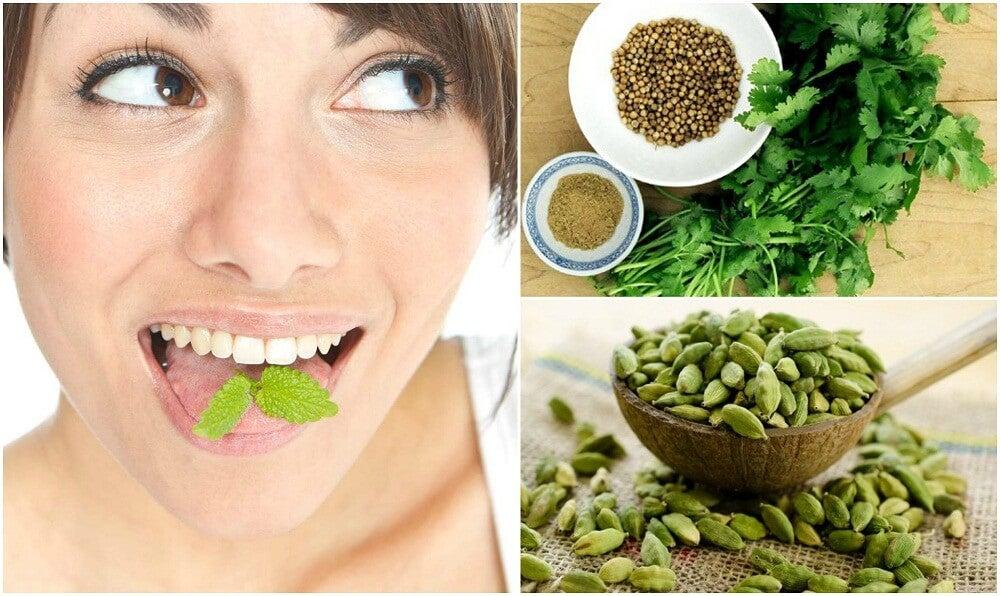 Refresca el aliento de tu boca con 6 plantas medicinales