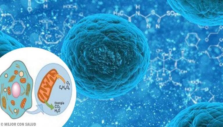 Bases teóricas de la respiración de las células