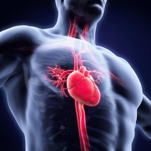 Uno de los beneficios de incluir soja en la dieta es que mejora el estado del sistema cardiovascular reduciendo los niveles de colesterol